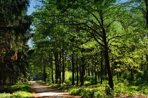 meerland-bospad